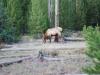 Yellowstone National Park 82