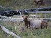 Yellowstone National Park 83
