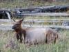 Yellowstone National Park 84
