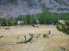 Yellowstone National Park 87