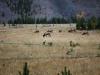 Yellowstone National Park 88