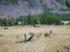 Yellowstone National Park 89