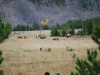 Yellowstone National Park 91