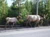 Yellowstone National Park 95