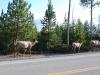 Yellowstone National Park 96