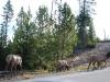 Yellowstone National Park 97