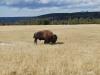 Yellowstone National Park 100