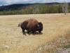 Yellowstone National Park 101