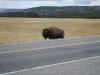 Yellowstone National Park 105