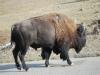 Yellowstone National Park 109