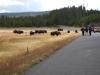Yellowstone National Park 110