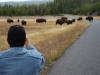 Yellowstone National Park 113