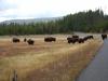 Yellowstone National Park 114