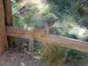 Veverička, Zion National Park. Utah