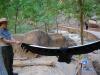 Rozpätie orlích krídel, Zion National Park, Utah
